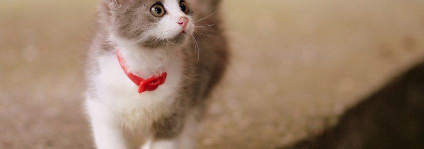 Frais vétérinaire pour son chat : pensez à l'assurance !
